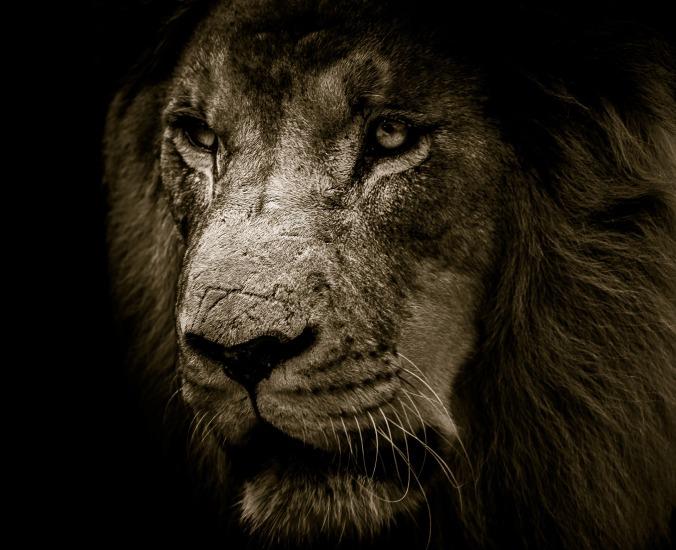 lion-3007701_1920